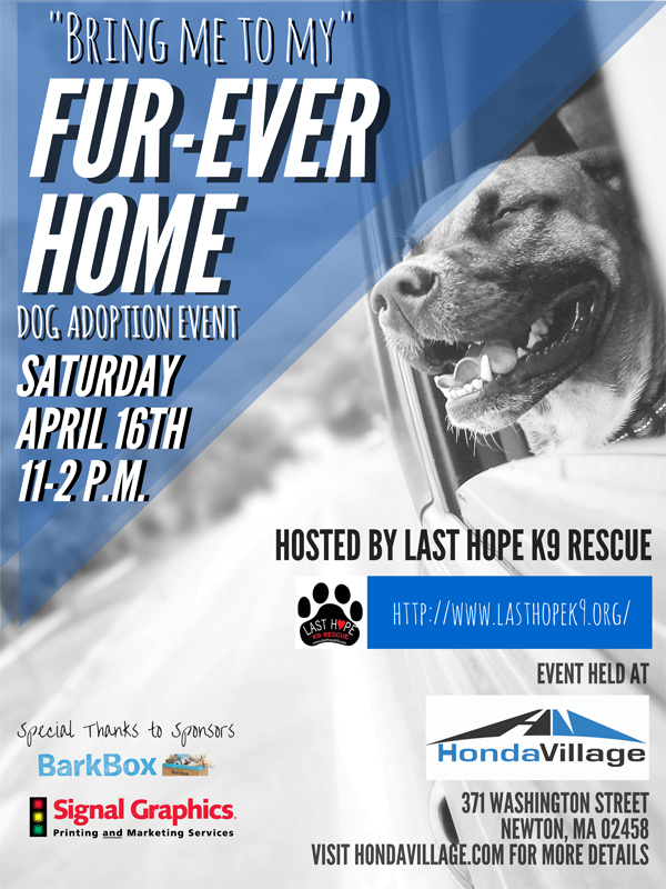 Honda Village Newton Dog Adoption Event