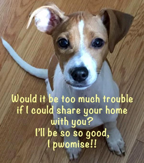 puppy-adoption-boston