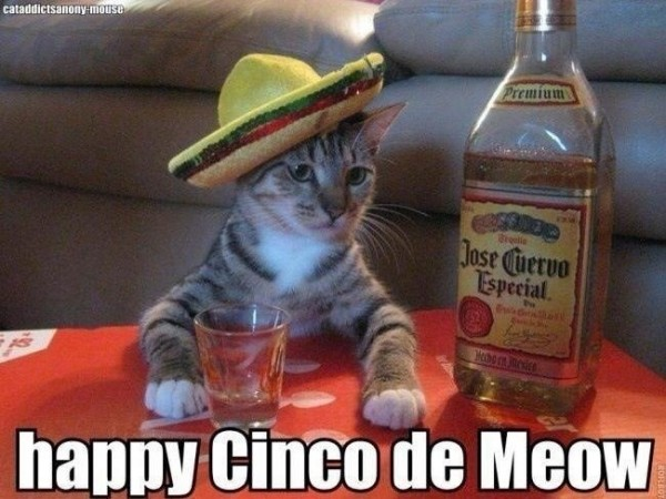 Cinco de Meow Cat